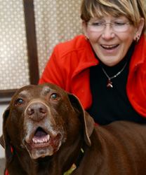 Sunny, a Chocolate Lab with Osteoarthritis