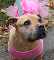 SAVE THE DATE - 3rd Annual Howl-O-Ween Pet Parade!